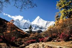阿吨自然保护在中国 免版税库存照片