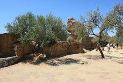 阿哥里根托意大利西西里岛寺庙谷 库存图片