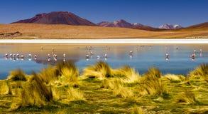 阿塔卡马沙漠盐舱内甲板的拉古纳,玻利维亚 库存照片