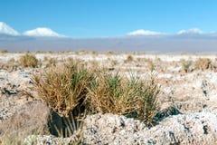 阿塔卡马沙漠风景被弄脏的背景与积雪覆盖的安地斯山的火山、盐舱内甲板和一些植被的在天际,智利 免版税库存图片