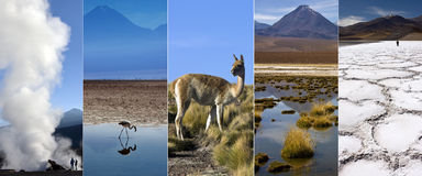 阿塔卡马沙漠-智利-南美 免版税库存照片