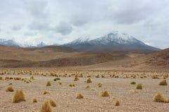 阿塔卡马沙漠 免版税图库摄影