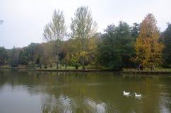 阿塔图尔克树木园 在湖附近的秋天树 图库摄影