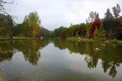 阿塔图尔克树木园 在湖附近的秋天树 免版税库存图片
