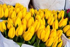 阿姆斯特丹开花市场 免版税库存照片