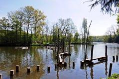 阿姆斯特丹森林和湖 免版税库存照片