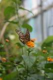 阿姆斯特丹蝴蝶动物园 免版税库存照片