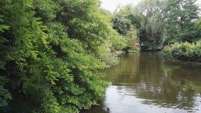 阿姆斯特丹走的自然河花 图库摄影