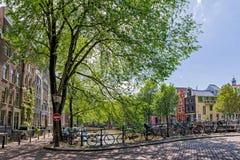 阿姆斯特丹:运河桥梁构筑与树 免版税库存图片