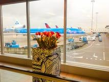 阿姆斯特丹- 20113 2月01, :飞机KLM在斯希普霍尔机场 库存图片