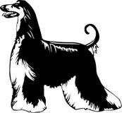 阿富汗猎犬例证 库存例证