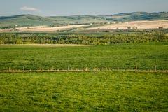 阿尔伯塔南部新鲜的绿色乡下,加拿大的省 免版税库存图片