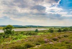 阿尔内欧石南丛生的荒野在多西特 库存照片