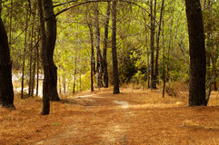 阿尔加威树 免版税图库摄影