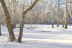 阿尔卑斯包括房子场面小的雪瑞士冬天森林 太阳冬天风景 免版税图库摄影