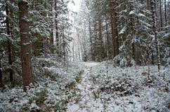 阿尔卑斯包括房子场面小的雪瑞士冬天森林 免版税库存照片