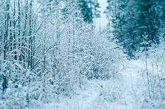 阿尔卑斯包括房子场面小的雪瑞士冬天森林 库存照片
