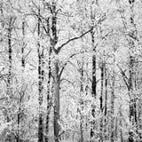 阿尔卑斯包括房子场面小的雪瑞士冬天森林 免版税图库摄影