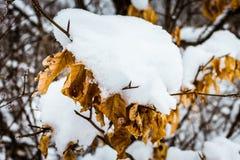 阿尔卑斯包括房子场面小的雪瑞士冬天森林 图库摄影