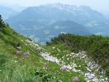 阿尔卑斯在欧洲 免版税库存照片