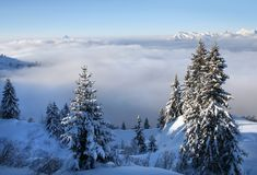 阿尔卑斯某个瑞士结构树 库存图片