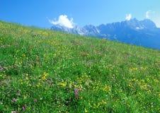 阿尔卑斯牧场地 免版税库存照片