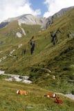 阿尔卑斯 免版税库存图片
