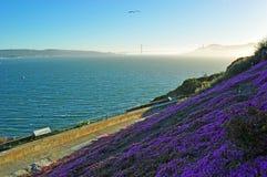 阿尔卡特拉斯岛,旧金山,加利福尼亚,美利坚合众国,美国 免版税库存照片