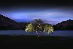 阿尔斯沃特湖树 免版税库存图片