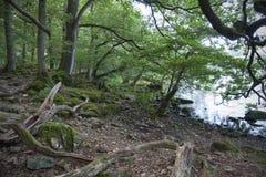 阿尔斯沃特湖的森林地 库存照片