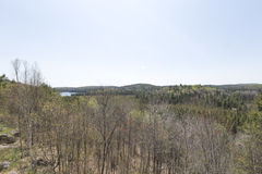 阿尔根金族公园,安大略-加拿大在春天 免版税库存图片