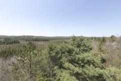 阿尔根金族公园,安大略-加拿大在春天 免版税库存照片