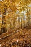 阿尔根金族地方上秋天的公园 免版税库存照片
