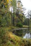 阿尔根金族秋天加拿大森林湖地方上10月安大略的公园 免版税图库摄影