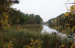 阿尔根金族秋天加拿大森林湖地方上10月安大略的公园 免版税库存图片