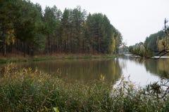阿尔根金族秋天加拿大森林湖地方上10月安大略的公园 库存图片
