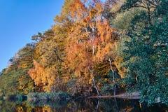 阿尔根金族秋天加拿大森林湖地方上10月安大略的公园 免版税库存照片
