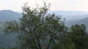 阿尔泰山全景从登上Tserkovka的在Belokurikha 股票录像