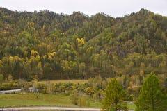阿尔泰山在秋天 黄色和绿色 图库摄影