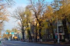 阿尔玛蒂公园和街道在秋天 库存图片