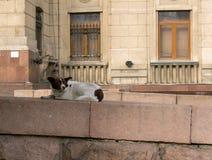 阿尔玛蒂,哈萨克斯坦,无家可归的狗 库存图片