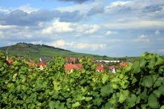 阿尔萨斯法国村庄vineyrad 库存图片