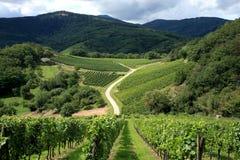 阿尔萨斯法国葡萄园 免版税库存照片