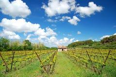 阿尔萨斯法国葡萄种植业 免版税库存图片