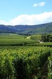 阿尔萨斯法国vineyrad vosges 库存图片