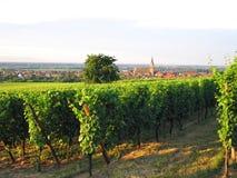阿尔萨斯法语wineyard 免版税库存照片