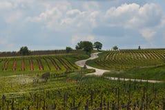 阿尔萨斯途径酒 葡萄园的看法 免版税库存图片