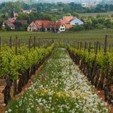 阿尔萨斯途径酒 葡萄园的看法 库存图片