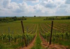 阿尔萨斯途径酒 葡萄园的看法 免版税库存照片