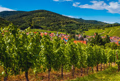 阿尔萨斯,法国葡萄园风景  库存图片